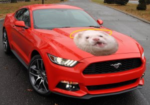 The 2016 Ford Mustang Heavenferret, yesterday